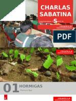Hormigas (Formica spp.).pptx