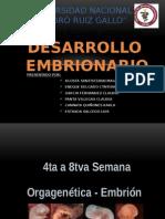 Formacion Del Embrion