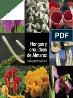 Hongos_orquideas (1)