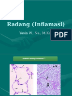 Radang (Inflamasi)