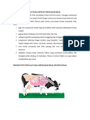 49++ Proses pencernaan makanan pada hewan ruminansia atau memamah biak terupdate