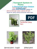 TransportPlant&Excretion2