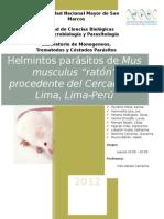 """Helmintos parásitos de Mus musculus """"ratón"""" procedente del Cercado de Lima, Lima-Perú"""