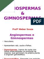 Angiospermas e Gimnospermas - 2ºano