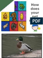 PPT pet's world