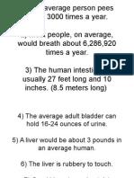 urinary system 2