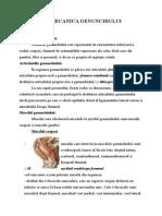 Referat La Biomecanică1