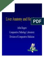 Liver Anat