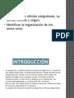CELULAS SANGUINEAS.pptx