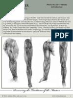 Anatomy Intro