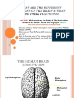 day 1-brain and its functions