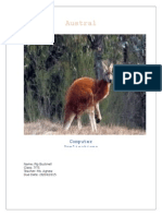 australian animals pip bucknell
