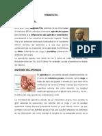 paedeapendicitis-130624222658-phpapp02