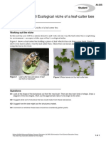 Ecological Niche of a Leaf-cutter Bee