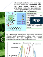 Clase 1 Fotosíntesis (Parte 4)