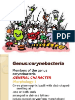Cory Ni Bacteria