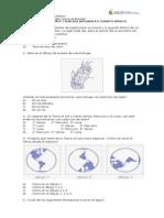 Ensayo SIMCE Ciencias naturales 4 básico 2015