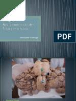 imgenesneuroanatomcasdeltroncoenceflico-131027000442-phpapp02