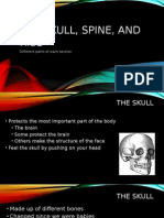 the skull, spine, and ribs (1)