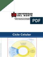 Ciclo Celular Teoria