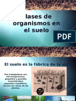 1-organismosdelsuelo-110517215353-phpapp02.pptx