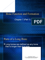 bonefunctionandformation2009-100914165233-phpapp02
