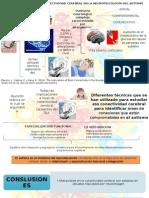 Las Implicaciones de La Conectividad Cerebral en La