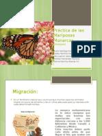 Práctica de Las Mariposas Monarcas