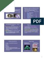 p_minerali_ig1_1380041855090.pdf