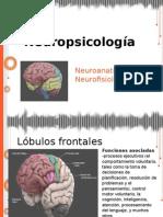 2° clase Neuropsicologia
