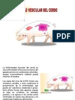 enfermedades vesicular del cerdo.pptx