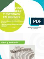 Articulacion Del Torax y Esternon