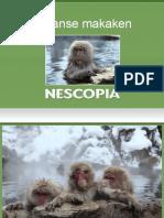 Japanse makaken