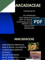 Anacardiacea