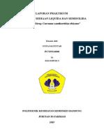Laporan Praktikum 1 - Curcuma xanthorrhiza