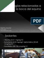 Patologias Relacionadas a La Boca Del Equino