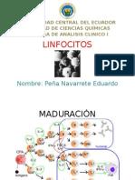 Linfocitos Y Tapón Hemostásico Primario- Peña Eduardo