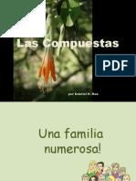 Astereaceae