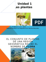 PPT Plantas (1).pptx