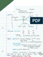 Nitrogen Metabolism Notes