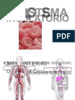 sistema-circulatorio 2.doc