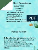 Enterobacter aerogenes