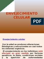 ENVEJECIMIENTO_CELULAR[1].ppt
