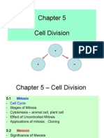 Chapter 5- Cell Division