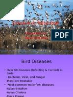 disease in waterfowl wlf 314