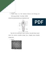 Struktur Mikroskopis + Komposisi Gigi