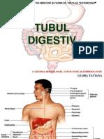 Digestiv (Author T.globa) (2)