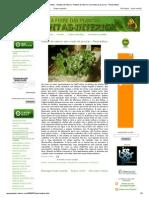 A Febre Das Plantas - Plantas de Interior_ Plantas de Interior Sem Medo de Procriar - Plectranthus