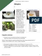 Zantedeschia Aethiopica – Wikipédia, A Enciclopédia Livre