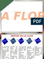 LA FLOR.pptx